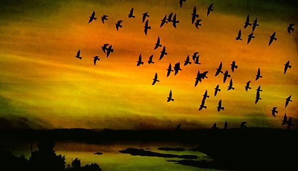 Resultado de imagen de golondrinas volando