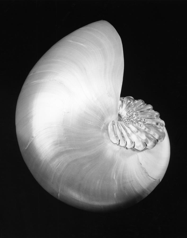 shellandcrystal